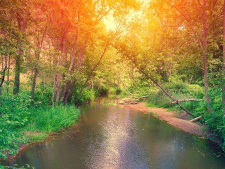 Kräuter der Natur - unterstützen bei Krankheiten und Leiden